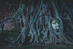 Cabeza de Budda en la ciudad histórica de Ayutthaya Foto de archivo libre de regalías