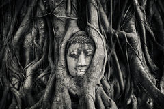 Cabeza de Buddhas fotos de archivo