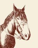 Cabeza de caballo Fotos de archivo