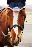 Cabeza de caballo Foto de archivo libre de regalías