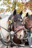 Cabeza de caballo adornada con las flores Imágenes de archivo libres de regalías