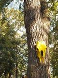 Cabeza de caballo amarilla en árbol grande Fotos de archivo libres de regalías