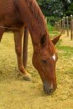 Cabeza de caballo cerca de la tierra Fotos de archivo libres de regalías