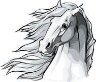 Cabeza de caballo con la melena que fluye en el viento Imagen de archivo