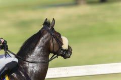 Cabeza de caballo de raza Imagen de archivo libre de regalías