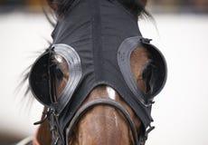 Cabeza de caballo de raza con el detalle los intermitente Foto de archivo