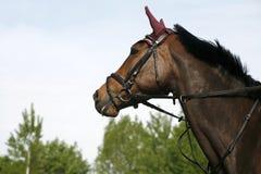 Cabeza de caballo deportiva contra fondo natural Foto de archivo libre de regalías