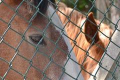 Cabeza de caballo detrás de la cerca Imágenes de archivo libres de regalías