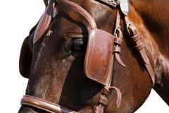 Cabeza de caballo en cierre del freno aislada en blanco Fotos de archivo libres de regalías