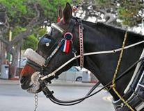Cabeza de caballo en el trabajo Fotos de archivo libres de regalías
