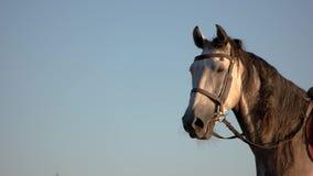 Cabeza de caballo en fondo azul