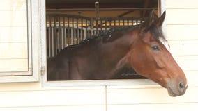 Cabeza de caballo en la ventana almacen de video
