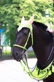 Cabeza de caballo en una vista lateral en el parque Imagen de archivo
