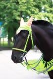 Cabeza de caballo en una vista lateral en el parque Foto de archivo