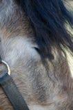 Cabeza de caballo gris negra Fotos de archivo