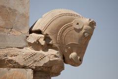 Cabeza de caballo, persepolis Fotografía de archivo libre de regalías