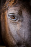 Cabeza de caballo - primer del ojo Fotografía de archivo
