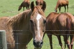 Cabeza de caballo rubia encendido fotos de archivo