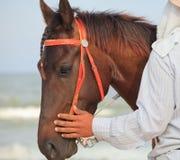 Cabeza de caballo y mano del encargado Fotografía de archivo