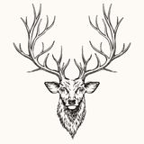 Cabeza de ciervos Fotografía de archivo