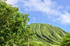Cabeza de Koko en Oahu, Hawaii fotos de archivo