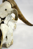 Cabeza de la cabra Foto de archivo