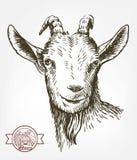Cabeza de la cabra ganado pasto animal bosquejo dibujado a mano libre illustration