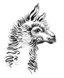 Cabeza de la llama libre illustration