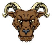 Cabeza de la mascota del Ram Fotografía de archivo libre de regalías