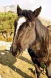 Cabeza de la mula en campo Fotos de archivo libres de regalías