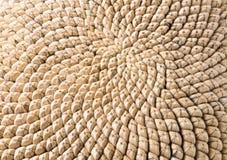 Cabeza de la semilla de girasol Foto de archivo libre de regalías