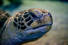 Cabeza de la tortuga Foto de archivo