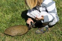 Cabeza de la tortuga Imagenes de archivo