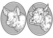 Cabeza de la vaca y del cerdo Bosquejo dibujado mano en un estilo gráfico Grabado del vector del vintage Fotografía de archivo libre de regalías