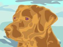 Cabeza de Labrador Fotografía de archivo