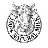 Cabeza de las vacas Leche natural 100 Grabado del vector del vintage Imagen de archivo