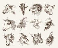 Cabeza de los animales del campo Imagen de archivo
