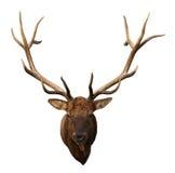 Cabeza de los ciervos Foto de archivo libre de regalías