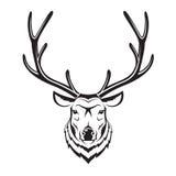 Cabeza de los ciervos Imagen de archivo libre de regalías