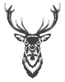 Cabeza de los ciervos Fotografía de archivo libre de regalías