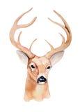 Cabeza de los ciervos de la acuarela Diseño para la camiseta handmade Foto de archivo libre de regalías