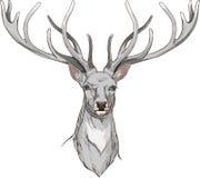 Cabeza de los ciervos del primer con los cuernos Fotografía de archivo libre de regalías