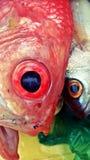 Cabeza de los pescados Fotos de archivo