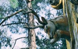 Cabeza de madera de los ciervos en la pared de madera en lugar público fotos de archivo libres de regalías