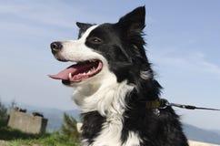 Cabeza de perro con el cielo de azules Imagen de archivo