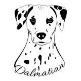 Cabeza de perro dálmata Imágenes de archivo libres de regalías
