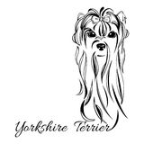 Cabeza de perro de Yorkshire Terrier Fotos de archivo libres de regalías