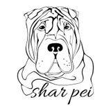 Cabeza de perro del pei de Shar Imagen de archivo libre de regalías