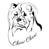 Cabeza de perro del perro chino de Chow Imágenes de archivo libres de regalías