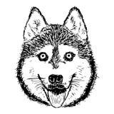 Cabeza de perro dibujada mano Imágenes de archivo libres de regalías